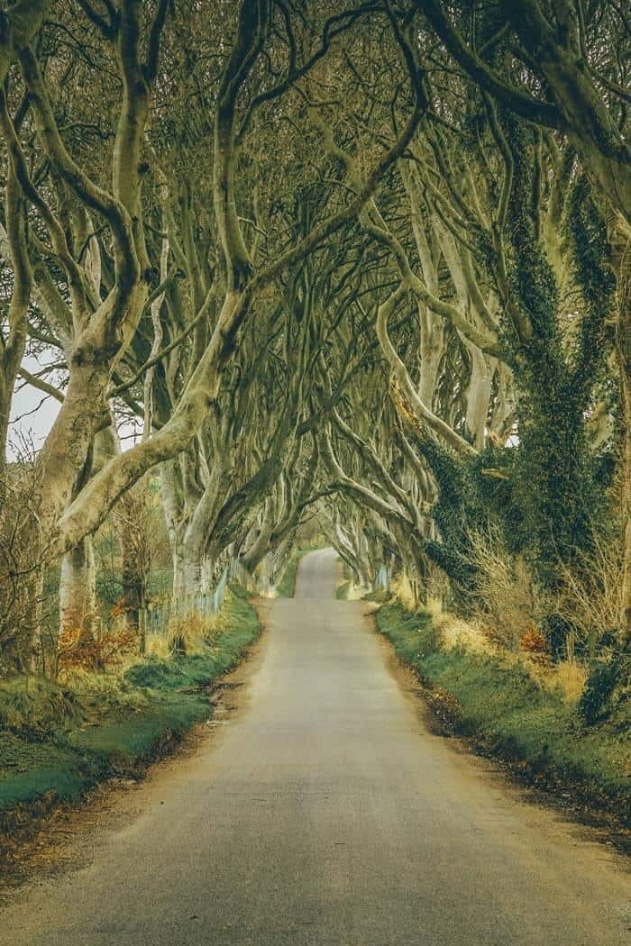 Dark Hedges, Northern Ireland. Explore 15 Fairytale Travel Destinations You Won't Want to Miss!