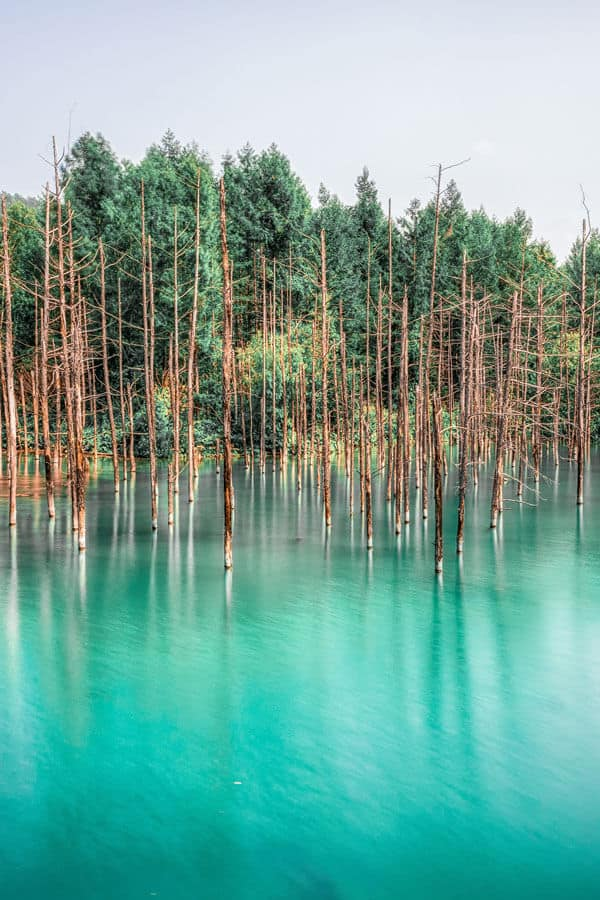 Blue Pond, Biei, Hokkaido