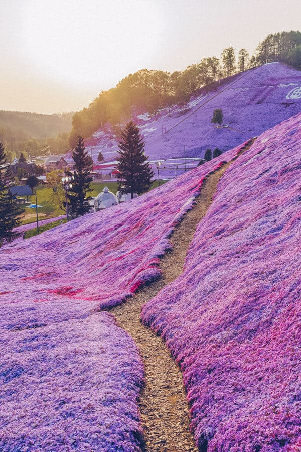 Shiba Sakura in Hokkaido Japan - Easily one of the top places to travel in Japan! #AVENLYLANE #AVENLYLANETRAVEL The Most Beautiful Places You Have to Add to your Japan Bucket List. This place is crazy beautiful! Check out these incredible places in Japan on www.avenlylane.com #Japan #asia #travelblog