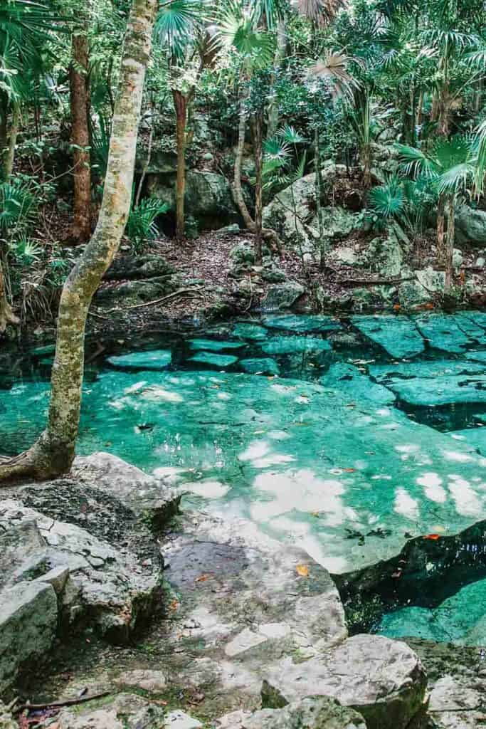 Cenote Azul - translation, Blue Cenote. This open air cenote is located right off the main highway, between Tulum and Playa del Carmen.