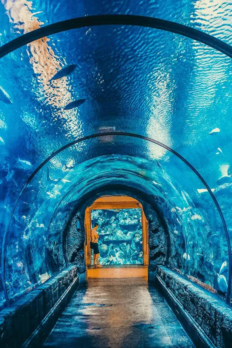 The Shark Reef Aquarium at Mandalay Bay hotel and casino