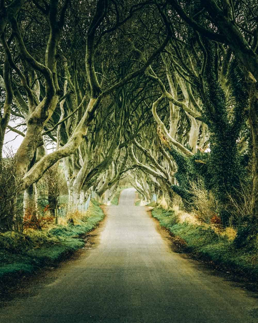 Magical landscape in Northern Ireland known as Dark Hedges